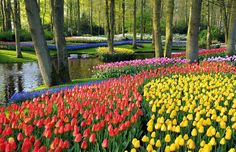 The patchwork quilt of colours in the Keukenhof park, just outside Lisse in South Holland