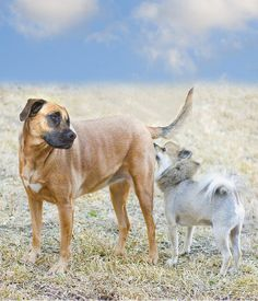The Smell Test: Why Dogs Sniff Butts