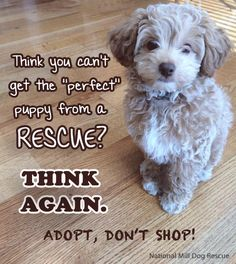 """You CAN find the """"perfect"""" dog through rescue. Every single breed can be adopted from a rescue, you just have to do your homework. It may take more effort, but it is so worth it in the end. #AdoptDontShop #NMDR #rescue"""