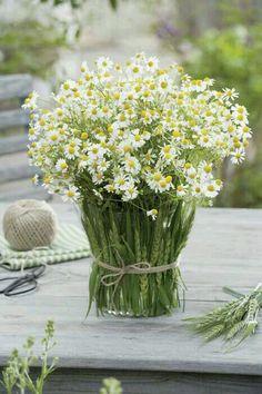 ♥✫✫❤️ *•. ❁.•*❥●♆● ❁ ڿڰۣ❁ La-la-la Bonne vie ♡❃∘✤ ॐ♥⭐▾๑ ♡༺✿ ♡·✳︎·❀‿ ❀♥❃ ~*~ WED May 25, 2016 ✨вℓυє мσση ✤ॐ ✧⚜✧ ❦♥⭐♢∘❃♦♡❊ ~*~ Have a Nice Day ❊ღ༺ ✿♡♥♫~*~ ♪ ♥❁●♆●✫✫ ஜℓvஜ