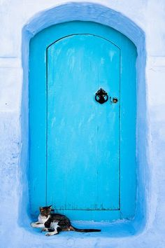 Kitty cat in Chefchaouen, Morocco.