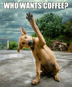 Funny Who Wants Coffee Dog