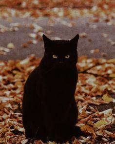 It's always Autumn — horrorandhalloween: by StephenBeaumontArt Black Cat Aesthetic, Autumn Aesthetic, Image Halloween, Fall Halloween, Halloween Night, Images Halloween Vintages, Herbst Bucket List, Autumn Cozy, Autumn Rain