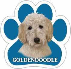 Goldendoodle Car Magnet With Unique Paw Shaped Design Measures 52 by 52 Inches Covered In High Quality UV Gloss For Weather Protection ** Read more at the affiliate link Amazon.com on image.