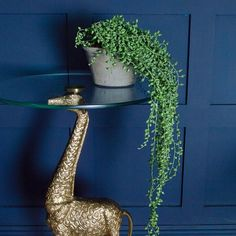 Refresh your décor with this Faux Potted trailing string of pearls. This trailing plant is perfect for bringing a little greenery into your home. Unusual Furniture, Cool Furniture, Bedroom Furniture, Anthropologie Home, Picture Shelves, Unusual Homes, String Of Pearls, Bohemian Interior, Making Waves