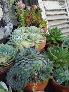 I now have 6 succulent plants and adding to my wishlist everyday. Really liking these beauties.