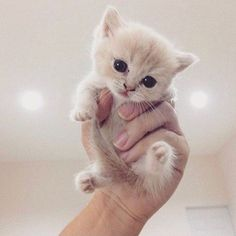 Cute Cats And Kittens Doing Funny Things Cute Kittens Names Cute Kittens, Kittens Cutest Baby, Fluffy Kittens, Funny Kitties, Cute Baby Cats, Small Kittens, Kittens Playing, Adorable Baby Animals, Cute Kitten Pics