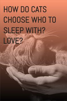 How do cats choose who to sleep with? cats sleeping with owners, why? My cat sleep on me, my cat sleep with me. #catssleeping Cute Cats And Kittens, Cool Cats, Training A Kitten, Cat Behavior Problems, Cat And Dog Memes, First Time Cat Owner, All Types Of Cats, Raining Cats And Dogs, Cat Accessories