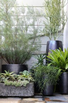 Wonderful collection of black modern contemporary planters and pots with green plants! So gorgeous against the pale gray wall! Indoor planters or outdoor planters! Container Plants, Container Gardening, Plant Containers, Outdoor Plants, Outdoor Gardens, Patio Plants, Pot Jardin, Garden Planters, Secret Gardens