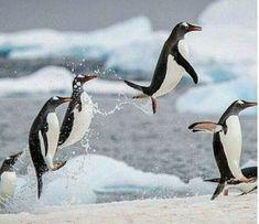 Cute Penguins, I'm Happy, Birds, Animals, Sailor, Im Happy, Animales, I Am Happy, Animaux