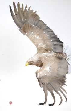 "<span class=""title"">White Tailed Eagle (Framed)</span>"