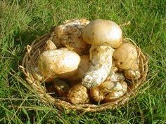 Wild Edibles! Read Chef Doug's post about foraging and cooking Vermont mushrooms.