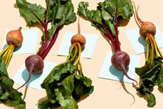 Fiber and High Fiber Foods: Changing Your Diet Changes Gut Bacteria