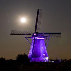 The Power of Purple ...Windmill