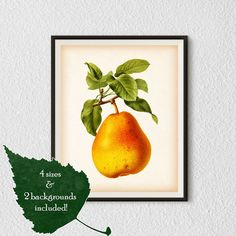 Prints for kitchen, Fruit art, Pear print, Vintage botanical print, Kitchen prints vintage, Fruit kitchen decor, 8x10, 11x14, A4, A3, #22.  YOU…