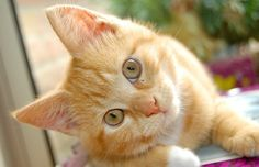 Porquê um gato? - Clube de Gatos do Sapo