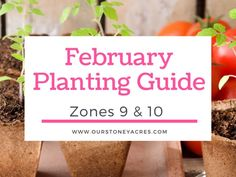 February Planting Guide-Zones 9 & 10 – Our Stoney Acres February Planting Guide-Zones 9 & 10 – Our Stoney Acres,My Garden! Everbearing Strawberries in your Backyard Garden – Our Stoney Acres Related posts:Seed Starting:. Container Gardening Vegetables, Planting Vegetables, Planting Seeds, Growing Vegetables, Planting Onions, Growing Green Beans, Tips For Growing Tomatoes, Growing Shallots, Everbearing Strawberries