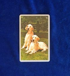 Beautiful Golden Retriever photo portrait playing card from the 1950s. Gold trim around the edges. A wonderful little gift for someone who