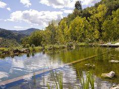 a naturalistic pool Natural Swimming Pools, Swimming Ponds, Natural Pools, Aquatic Plants, My Secret Garden, Decoration, Outdoor Spaces, Photos, Backyard