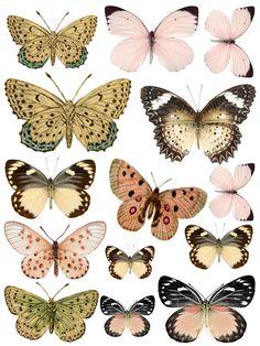 Swirlydoos: / Butterflies                                                                                                                                                                                 Más
