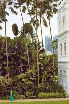 Jungle Gardens, Backyard, Plants, Patio, Backyards, Plant, Planets