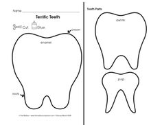 parts of a tooth worksheet click here parts of a to download the document. Black Bedroom Furniture Sets. Home Design Ideas