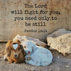 Bible Memory Verse Of The Month: Exodus The Lord will fight for you, you… Scripture Verses, Bible Verses Quotes, Bible Scriptures, Faith Quotes, Exodus 14 14, Memory Verse, Spiritual Quotes, Healing Quotes, Word Of God
