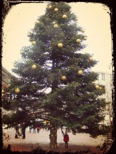 bigchristmastree.jpg #marissa #kerst #photo idea