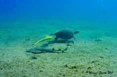 (1) Sea Research Society (shipwrecks, underwater archaeology, marine biology)