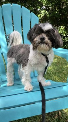 Shih Tzu Rescue | Available Dogs for Adoption Shih Tzu Rescue, Shih Tzu Puppy, Shih Tzus, Small Dog Rescue, Rescue Dogs, Mixed Breed, Doggies, Dog Breeds, Cute Dogs