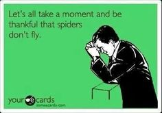 Let's all take a moment and be thankful that spiders don't fly! Funny and completely, terrifyingly true! :)