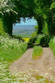 Hertfordshire in June (England) by Jason Ballard