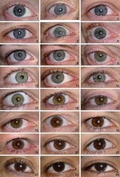 Grading of Iris Color with an Extended Photographic Reference Set Grading of Iris Color with an Extended Photographic Reference Set Anatomy Reference, Art Reference Poses, Drawing Reference, Pretty Eyes, Beautiful Eyes, Eye Color Chart, Eye Color Facts, Eye Facts, Rare Eye Colors