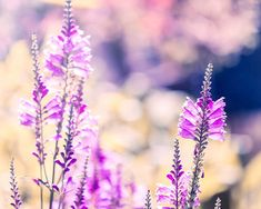 spring photography lilac wall art botanical by mylittlepixels