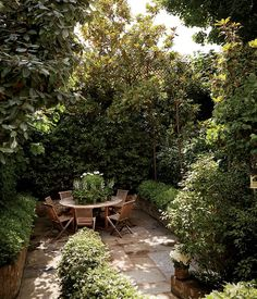 Urban Garden Lush magnolias, camellias, and ivy make for a garden oasis in the city. - A look inside the London home of newlyweds Caroline Sieber and Fritz von Westenholz. Garden Oasis, Garden Cottage, Garden Spaces, Farmhouse Garden, Rooftop Garden, Back Gardens, Small Gardens, Outdoor Gardens, Outdoor Sheds