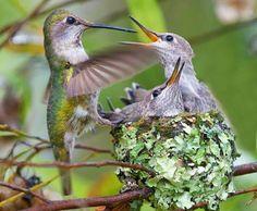 Daily Kos: Remembering Mom - Nature photo diary