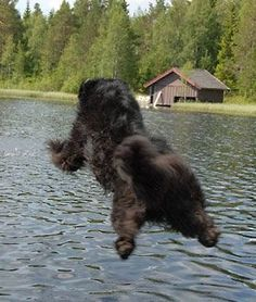 flying newfie