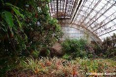 Afbeeldingsresultaat voor old abandoned conservatory