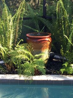DIY Garden Fountain Add a beautiful water feature to even a small space with this DIY fountain Garden Water Fountains, Diy Fountain, Garden Ponds, Water Gardens, Ceramic Planters, Planter Pots, Do It Yourself Home, Water Features, Palm Trees