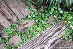 フローラのガーデニング・園芸作業日記-ガーデン 庭 花壇 休憩小屋