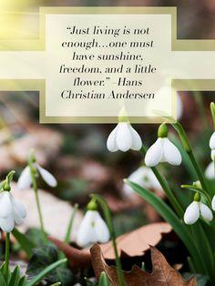 Flowering Wisdom   Gardening Quotes #gardening #quotes #hanschristiananderson #lnandscaping