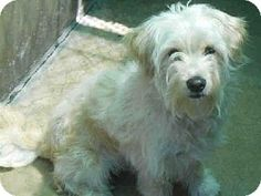 Young, male Wheaten Terrier Mix. No name yet! He's already neutered