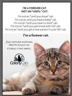 This is so true! I hate it when people say they are getting rid of their cat you wouldn't say oh I'm getting rid of my 2yr old child!