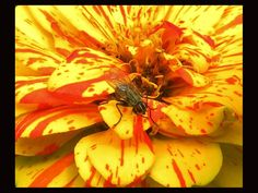 Yellow Orange Fly by Kathleen Mendel