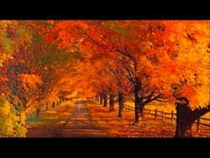photo scenery Imagine walking down this road with your loved one; talking, loving, holding one another in this beautiful setting. Let God's creation be a factor in the way you show love