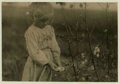 October, 1913 - Houston, Texas. Millie, a 4-year-old cotton picker, on farm near Houston. She picked about eight pounds of cotton a day.