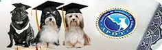 dog trainer search for dog training...a trainer website. The Nashville Dog Training Club did not have the best reviews....(but they were old reviews)