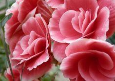foto de flores hermosas