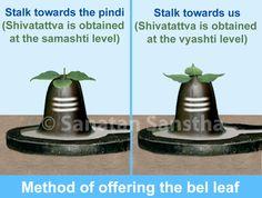 Why are trifoliate bel leaves offered to Lord Shiva with their stalks facing oneself? Hindu Rituals, Hindu Mantras, Lord Shiva, Hinduism History, Hindu Vedas, Shiva Shankar, Gayatri Mantra, Shiva Linga, Krishna Statue