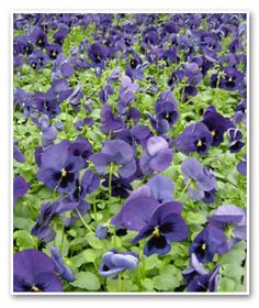 1000 Images About Shade Garden On Pinterest Shades